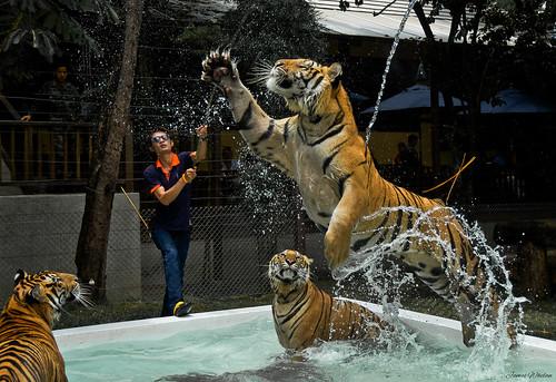 Tiger Leap