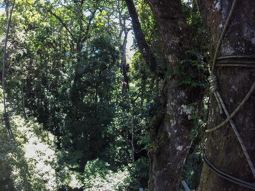 Monteverde: Miss V sur une tyrolienne