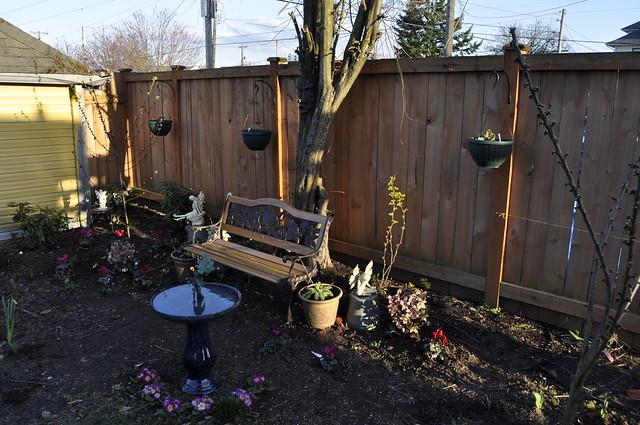 fairy garden fuchsias 002