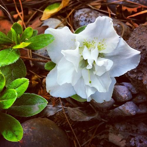 Gardenia down. #casabesttogether