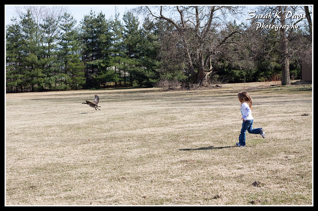 Kinsey Chasing a Goose