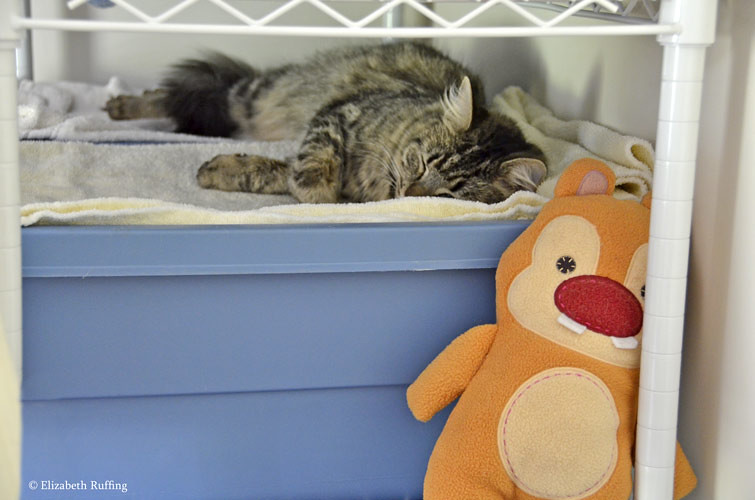 Tabby cat napping with Chip or Dale, by Elizabeth Ruffing