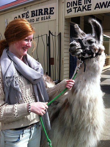 Birregurra llama by Whippet Good
