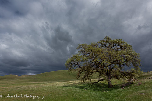 foothills storm tree clouds dark landscape oak ominous ngc sierra hills lone minimalist naturesbest nationalgeographic chaparral outdoorphotographer canon5dmarkii robinblackphotography