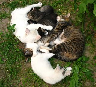 cats gang relax1