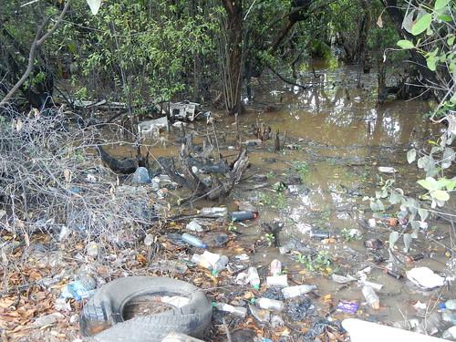 Trash floats in mangrove swamp on back side of Caye Caulker