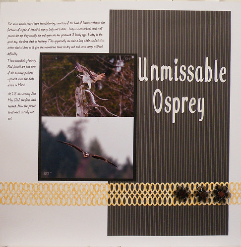 Unmissable Osprey