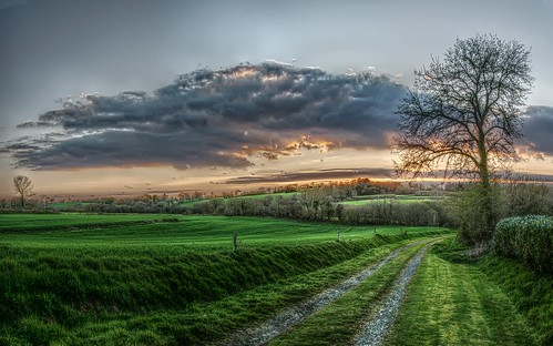 sunset france tree nikon brittany meadow bretagne hdr d300
