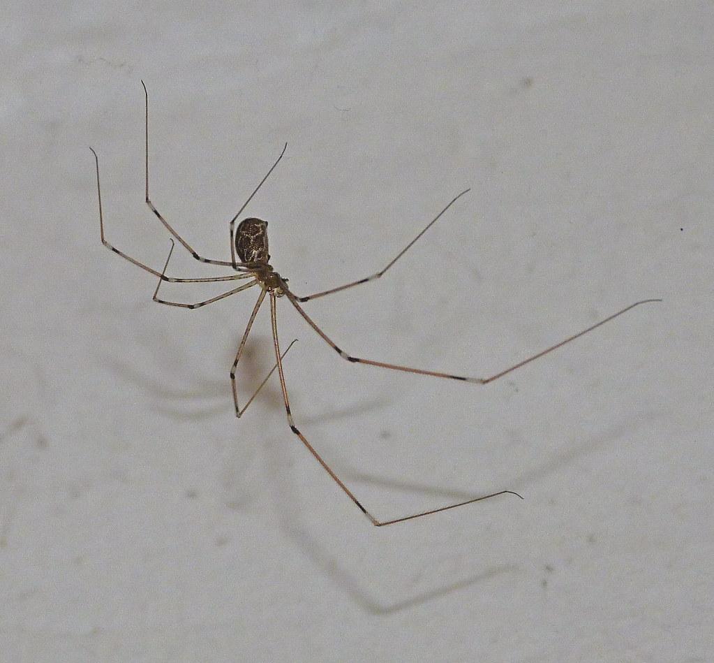 19-05-2012-toilet-spider