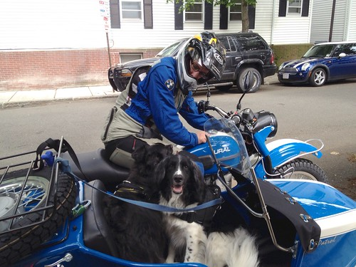 Dogs meet Ural