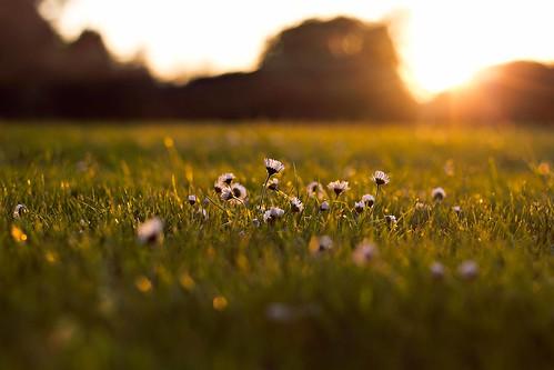 flowers sunset