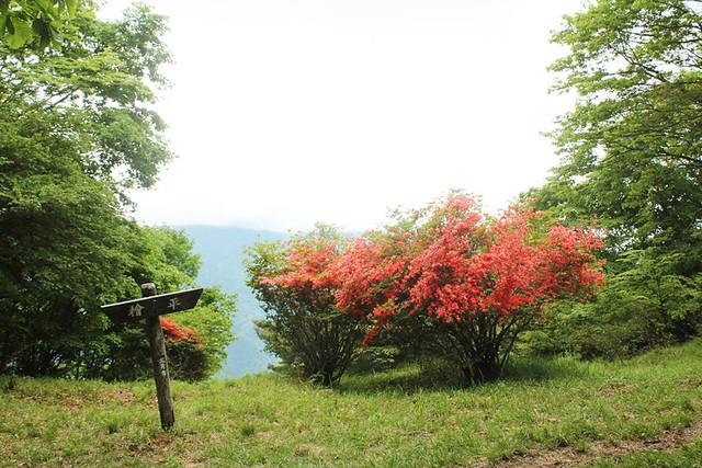 滝子山_37