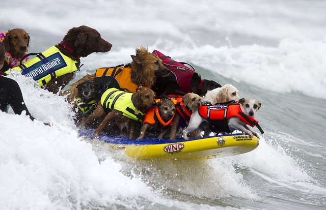 World Record 17 Dogs on one surf board