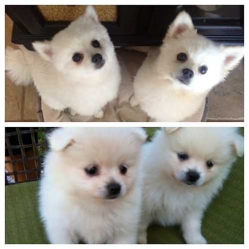 Happy 1st Birthday to the puppies, Daisy & Pippa! by Our Family Nest