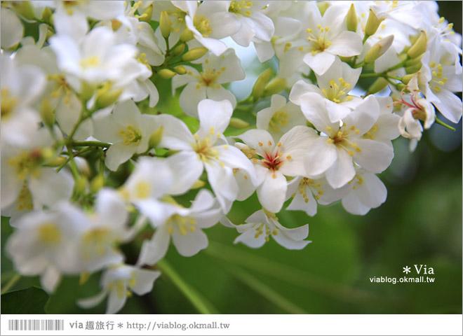 【桐花2014】南投油桐花景點~牛耳石雕藝術渡假村賞桐趣18