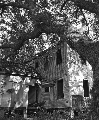 bw house tree abandoned oak alabama gimp bn dauphinisland 17mm zd olympusep1