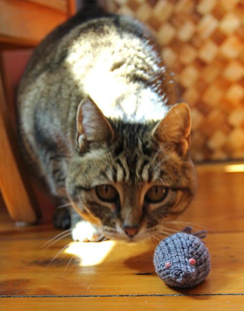cat_stare