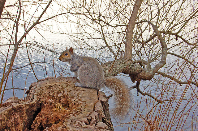 April Squirrel