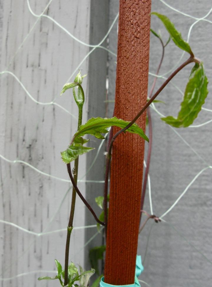 spring garden 007