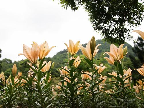 120429 桃源仙谷 -7