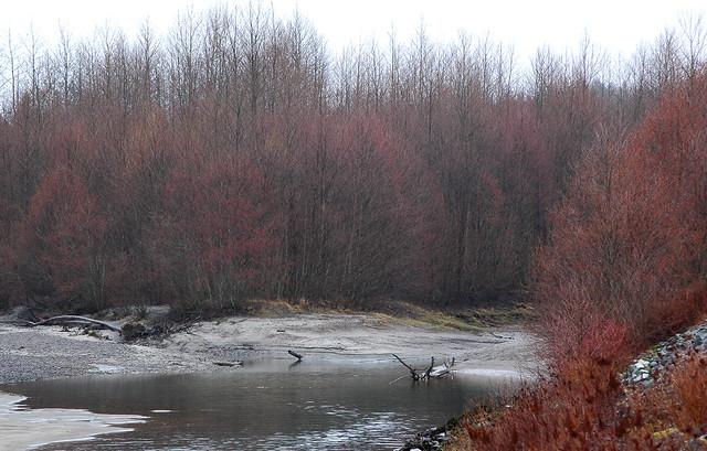 squamish river 6
