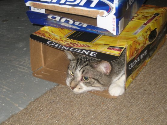[Mesa in a empty beer box]