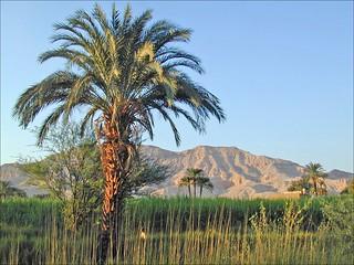 La montagne thébaine (Egypte)