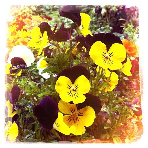 Flower06 #hipstamatic