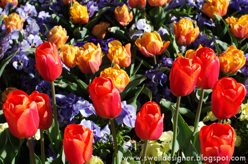 tulip-gardens-thanksgiving-point-4