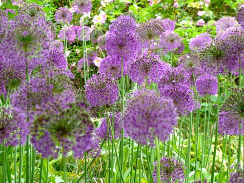 flower natur blume plantenunbloomen