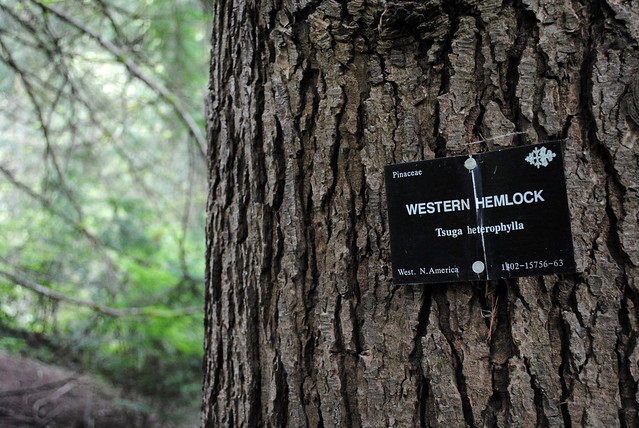 Tree ID nameplates - Hoyt Arboretum - Portland, Oregon