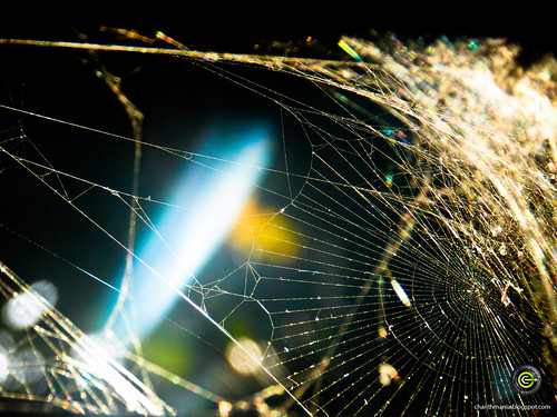 Shining Spider Web by CharithMania
