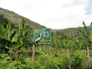 വാഴകൃഷി - ഇരുപ്പ്, കര്ണാടക