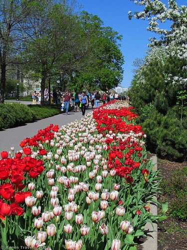 A tulip display in Major's Hill Park, Ottawa, Canada