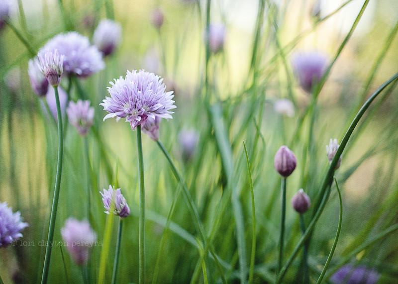 purplegarden-14