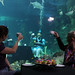 Sydney Aquarium Mad Hatters Tea Party