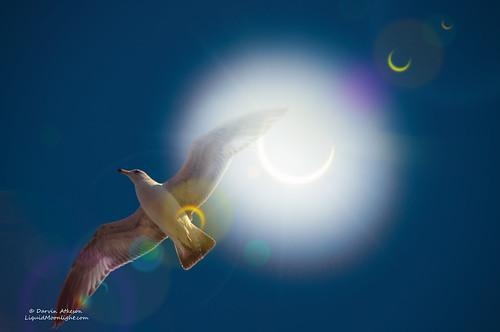 sanfrancisco california sun moon sol solar eclipse seagull gull filter wrapper poptart partial solareclipse eclipsed darvin annular atkeson darv liquidmoonlightcom lynneal
