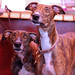 Greyhounds by whitbywoof