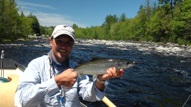 First West Branch salmon on a dryfly for the season