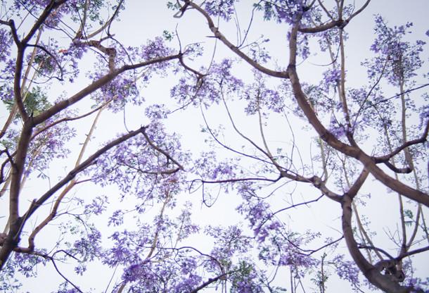 purple makes me happy 3