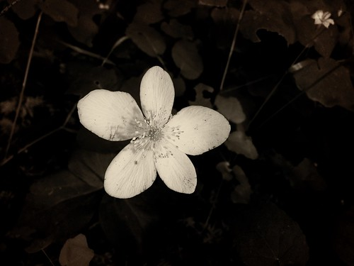 firstlight by Nature Morte