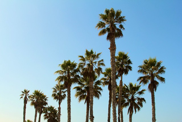 Palm Tree Perfection