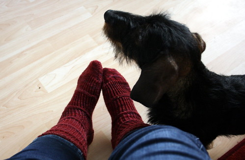 assari ja sukat