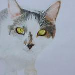 Lord Kitten