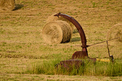 Hay Rolls In The Field
