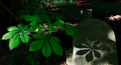 verdant shadow