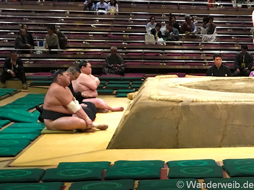 sumo (23 von 1)