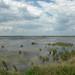 Fish pond (R. Davidson)