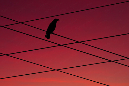 Bird on many wires!!