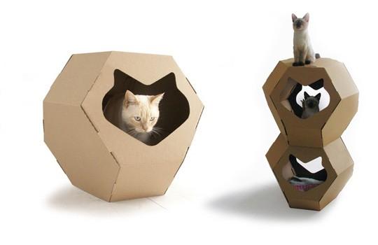 cats&cardboard_013